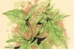 Potato. Oil and pencil on paper, 16 x 30 cm, 1999