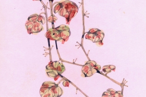 Ivy. Oil and pencil on paper, 16 x 30 cm, 1999